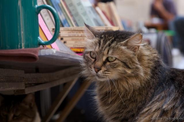 istanbul street cats 2