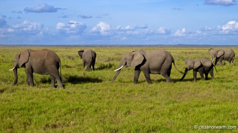 National Parks of Kenya Amboseli