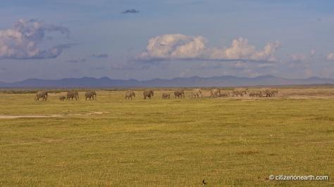 kenya amboseli elephants
