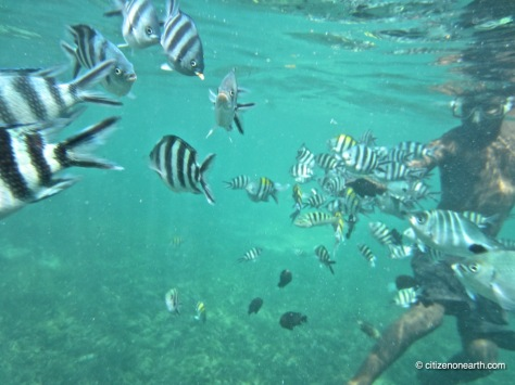 kenya mombasa snorkeling