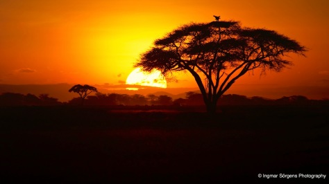 Sunset in Amboseli