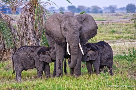 tsawo west elephant calf