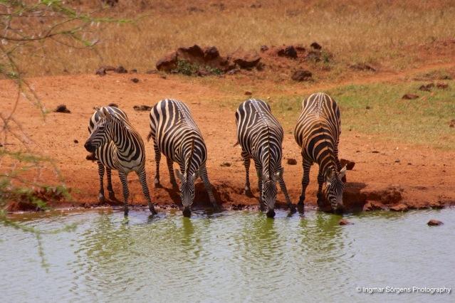 tsawo west zebra waterhole