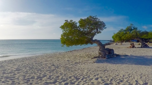 aruba-eagle-beach-fofoti-tree