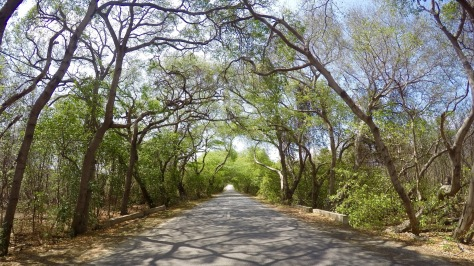 curacao-road-with-trees