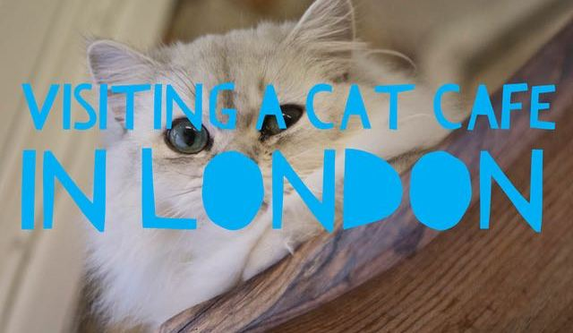 Visiting a Cat Café in London