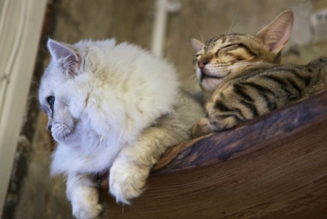 how visiting a cat cafe works london