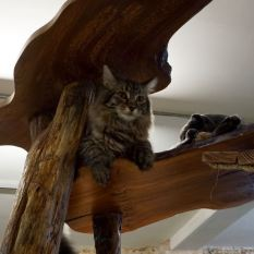 london cat cafe cat village ground rules