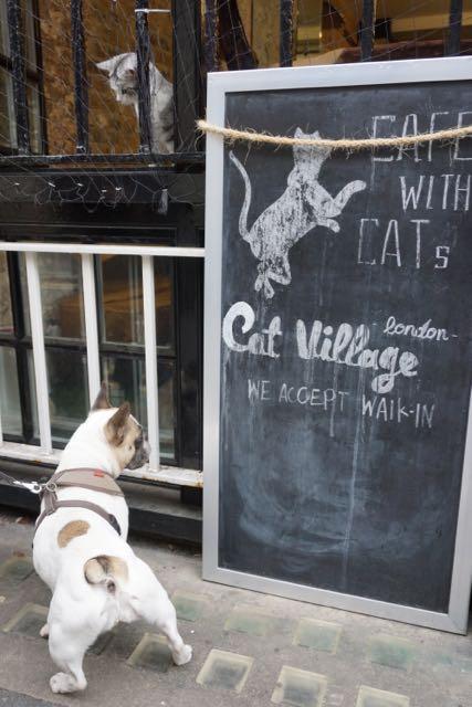 london cat cafe cat village