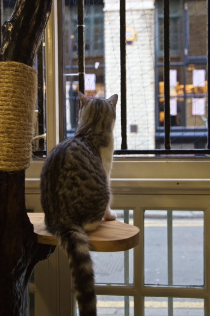 london cat cafe ground rules