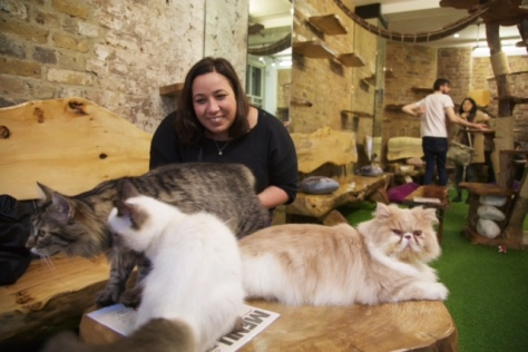 london cat village cat cafe walk-in