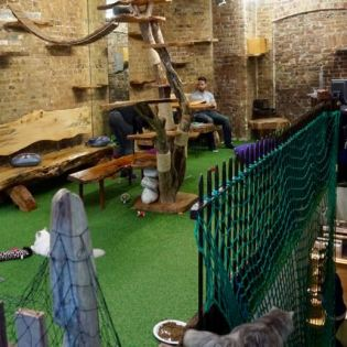 visit a cat cafe cat village in london