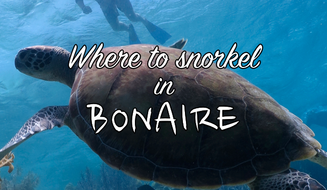 Where to snorkel in Bonaire?