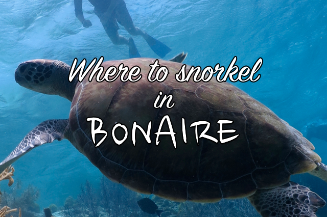 where to snorkel in bonaire