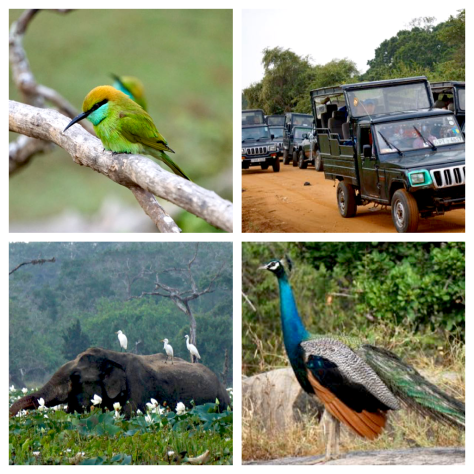 travel itiniery in Sri Lanka Yala National Park