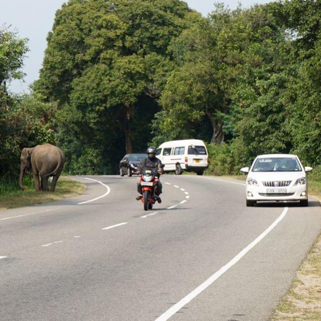 Visiting ancient city Pollonaruwa Sri Lanka - How to get to Pollonaruwa