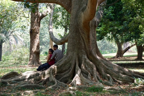 2 days in Kandy Central Province of Sri Lanka - Royal Botanical Garden - Huge trees with thick roots