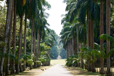 2 days in Kandy Central Province of Sri Lanka - Royal Botanical Garden - Palm Avenue