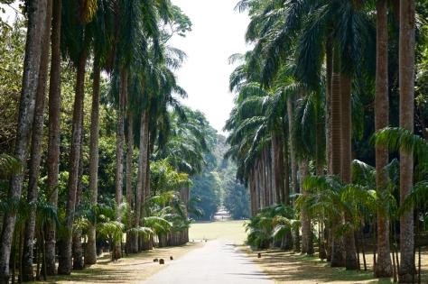 2 days in Kandy Central Province of Sri Lanka - Royal Botanical Garden - Palm Avenue