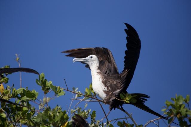 Things to do in 2 days in Merida - Yucatan Peninsula - Mexico - Boat tour in Celestun River for bird watching