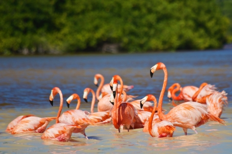 Things to do in 2 days in Merida - Yucatan Peninsula - Mexico - Boat tour in Celestun River to observe Pink Flamingos