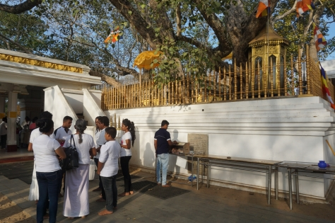 Visiting Ancient City of Anuradhapura in Sri Lanka - Sri Maha Bodhi Tree