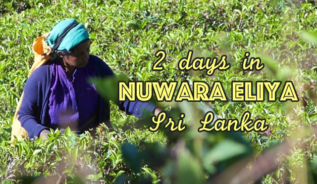 2 days in Nuwara Eliya - Hill Country of Sri Lanka - Hearth of Tea Production