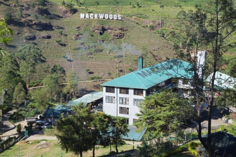 2 days in Nuwara Eliya Hill Country Sri Lanka Visiting a Tea Estate