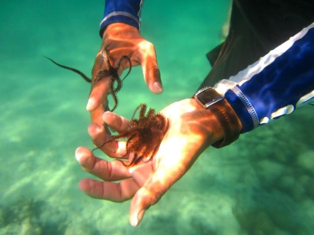 Things to do in Riviera Maya - Mexico - Snorkeling in Akumal
