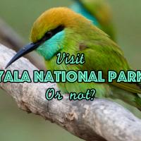 Visit Yala National Park or not?