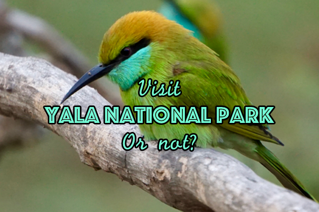 Visit Yala National Park or not?