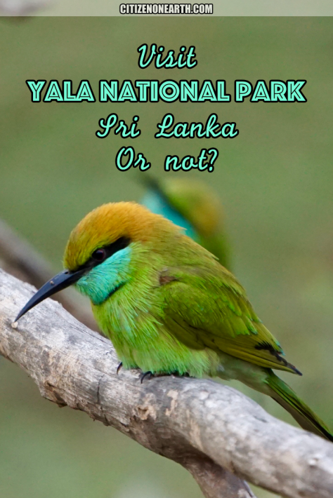 Should I Visit Yala National Park in Sri Lanka or not